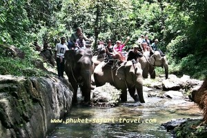 Elefant Trekking Khao Sok National Park Thailand