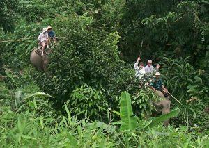 Phuket Elephant Trekking Safari