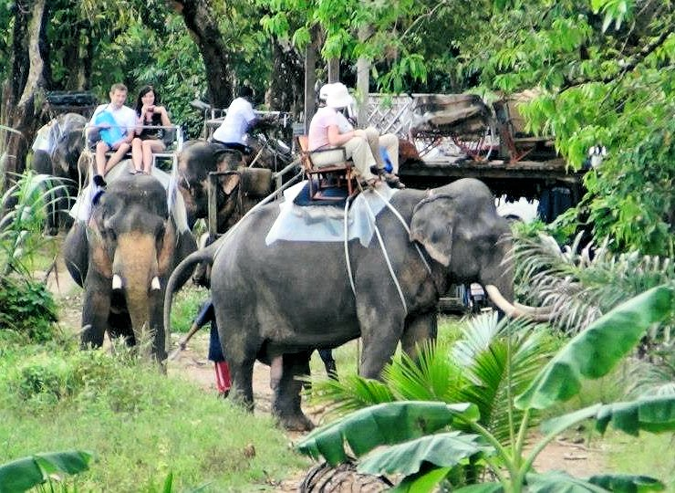 Phuket Safari Travel in Thailand : We are a Eco-friendly SafariThailand Eco-t...